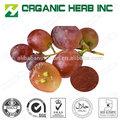 Extrait de pépins de raisin 95% opc/95% poudre d'extrait de pépins de raisin proanthocyanidines opc