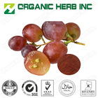 grape seed extract 95% OPC/grape seed extract powder 95% Proanthocyanidins OPC