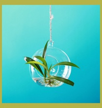 clear hanging glass balls terrarium wholesale