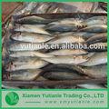 produits en porcelaine de gros poissons congelés entreprise