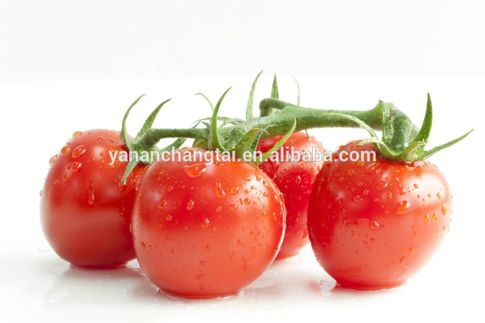 Gmp fabrik-versorgungsmaterial hei�er verkauf hochwertiger Tomaten ...