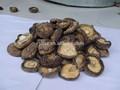 indien de champignons