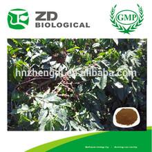 grão de café verde extrato ácido clorogênico pode ser fazer café cápsula