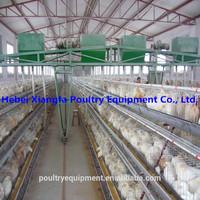 2015 hot sale Professional Chicken Farming