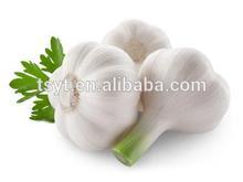 2014 Crop China Produced Fresh Garlic