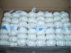 chinese fresh garlic 3bulb 5bulb