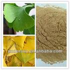 Weight Loss USP Standard product Hot sell ginkgo biloba extract