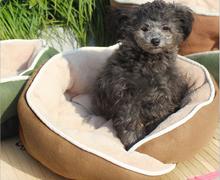 2015 Popular Dog BedPB-TC1