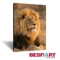 venta al por mayor de león africano estirada lienzo cuadros de arte