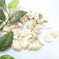 congelés champignons secs blancs acheteurs de champignons en inde