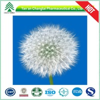 UV/HPLC GMP 100% natural dandelion root extract powder in bulk for sale