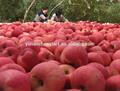A la venta ahora Tops extracto de manzana