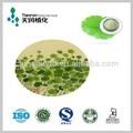 100% naturale centella asiatica erba estratto