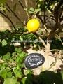 Arte nuevo jardín de piedra planta de marcadores( diferentes de plantas nombre)