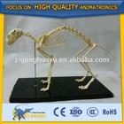 Cetnology Biomedical Medical teaching/lecture model cat skeleton