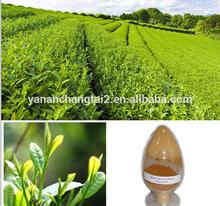 GMP factory supply Hot sale high quality Tea Saponin 50-98%