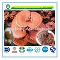Gmp certificado populares a base de hierbas de hongo Reishi P.E