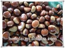 grandi dimensioni 2015 biologici freschi castagne in guscio per la vendita