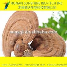 enhancing immunity herbal medicine dried reishi mushroom extract ganoderma lucidum extract