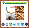 gmp fabbrica alimentazione caldo vendita di alta qualità cinese bruco fungo cordyceps
