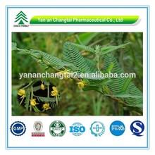 Hot Sale GMP Certificate 100% Pure Natural nomame senna herb