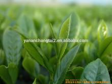 Hot Sale Green Tea Extract Powder EGCG
