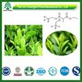 Bv certificado fuente del fabricante de alta calidad al mejor precio chino té verde