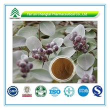GMP Certificate Popular Herbal Vitex agnus-castus L Extract