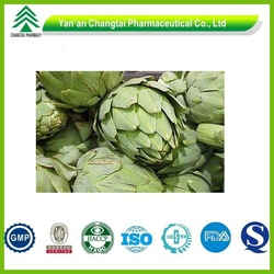 ISO manufacturer supply natural and high quality globe artichoke