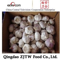 China Garlic Best Quality Lowest Garlic Price