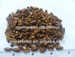 Dried silkworm FIsh Food
