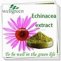 Echinacea purpurea suplemento echinacea sementes echinacea sementes venda