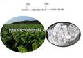 مستخلصات الاعشاب استخراج أوراق التبغ 90% مسحوق مادة سولانسول