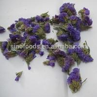 Myosotis sylvatica dry flower purple flower tea