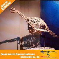 Provide various realistic animal skeleton replica