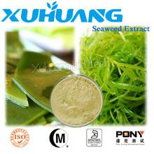 Fucoxantina/ascophyllum nodosum/estratto di alghe fertilizzante fogliare