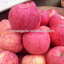 Yantai new crop Fresh high quality Fuji Apple