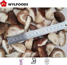 china good price shiitake mushroom