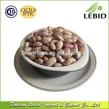 forma redonda lskb nova safra de açúcar feijão pinto beans