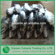 Wholesale products china Live Catfish