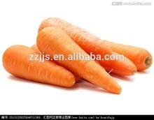 wholesale carrots keep carrots fresh import fresh carrots Xiamen base suply