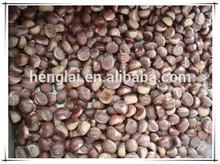 New Organic fresh chestnuts raw dried fruit