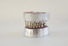 SE311123 Metal Teeth Extraction Model