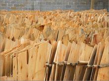 China supplier natural wood veneer eucalyptus wood chips
