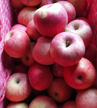 high technology fresh fruits qinguan apple original huaniu apples on sale
