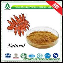 Herbal 5:1,10:1,20:1 birch leaf P.E. betulin powder for Pharmaceuticals