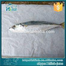 FROZEN FRESH LEATHER JACKET FISH