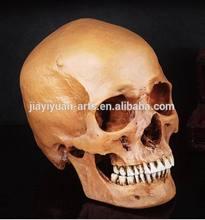 Lifelike Real Human Proportion Halloween Props sketch model Skull Human Resin Head Skull