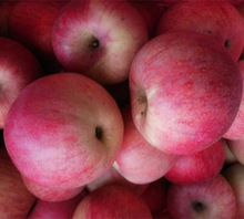Matured apple fruits Variety and fresh fruits Type mature whole qinguan apples