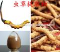 Gmp fabbrica alimentazione caldo vendita di alta qualità cinese bruco fungo cordyceps 90%
